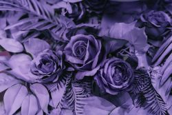 "Pantone's ""Ultra Violet"" is the Ultimate Feminine Energy Color for 2018"